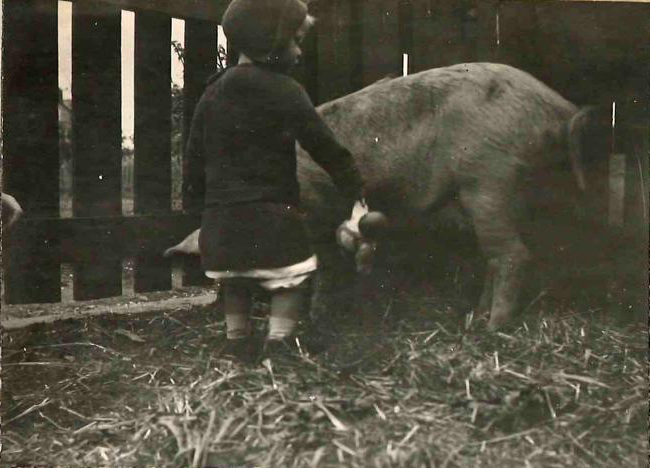 Keeping pigs for the war effort, 1914-1918 Edith Gardiner writes, 'The fiat had gone forth! We were to keep pigs. Had not the Board of Agriculture pronounced the disirability of true patriots' keeping animals for food? Our new house was almost ready for us, and the garden, as yet unplanted, would surely provide much for the sustinance of