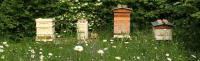 Cambridgeshire Beekeepers' Association